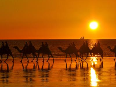Sunset camel trekking in Broome. Photo credit: Tourism WA