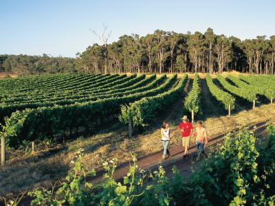 Group walking through the vines at Peccavi Estate.  Photo credit: Tourism Western Australia.