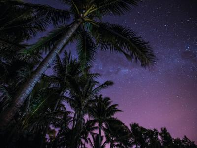 Under the starry sky and palm trees in Northern Western Australia. Photo credit: Tourism WA