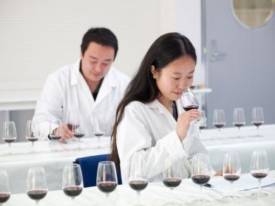 Learn about working in the wine industry in one of the world's top wine-producing countries.  Photo credit: EIT