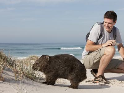 Meeting a wombat. Photo credit: Tourism Australia copyright.